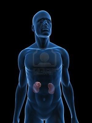 5273069-transparente-corps-avec-le-cancer-du-rein.jpg