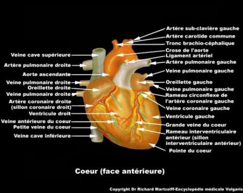 visuel-coeur_ant-0bc.jpg